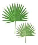 Isolerade palmblad vektor illustrationer