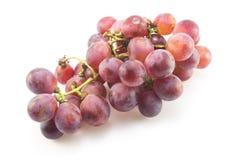 Isolerade röda druvor Arkivfoto