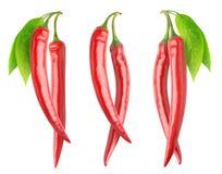 Isolerade röda peppar på filialer Arkivfoton