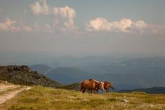 isolerade roliga hästar för djur tecknad filmteckenfamilj Royaltyfria Bilder