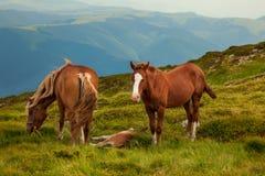 isolerade roliga hästar för djur tecknad filmteckenfamilj Arkivbild