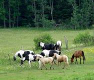 isolerade roliga hästar för djur tecknad filmteckenfamilj Royaltyfria Foton