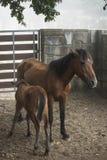 isolerade roliga hästar för djur tecknad filmteckenfamilj Royaltyfri Bild