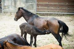isolerade roliga hästar för djur tecknad filmteckenfamilj Royaltyfri Fotografi