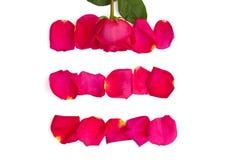 Isolerade rosa och ljusa rosa kronblad Royaltyfri Foto