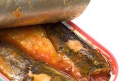 isolerade sardines på burk Royaltyfri Foto