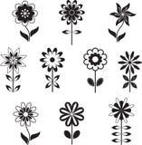 Isolerade svartvita blommaillustrationer Arkivbild