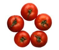 isolerade tomater Royaltyfri Bild