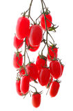 isolerade tomater för grupp Cherry Royaltyfri Bild