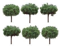 Isolerade träd, sörjer stam royaltyfri bild