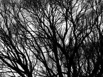 Isolerade trädkonturer Arkivbilder