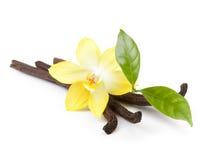 Isolerade vaniljfröskidor och blomma royaltyfri foto
