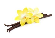 Isolerade vaniljfröskidor och blomma arkivfoto