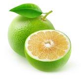 Isolerade vita grapefrukter Fotografering för Bildbyråer