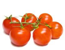 isolerat över vita tomater royaltyfria bilder