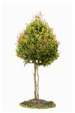 Isolerat av enkelt träd Royaltyfri Fotografi