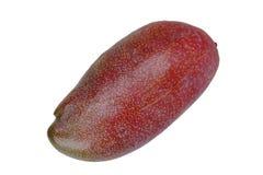 Isolerat av populär frukt, mogen natt röda Palmer Mango royaltyfri bild