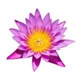 Isolerat av rosa lotusblomma Royaltyfri Fotografi