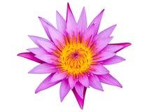 Isolerat av rosa lotusblomma på vit bakgrund Royaltyfri Bild