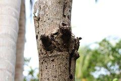 Isolerat dött träd royaltyfri bild