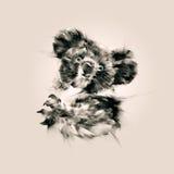 Isolerat dra en stående av den djura koalan Royaltyfria Foton