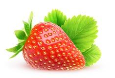 isolerat en jordgubbe Arkivfoto