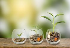 isolerat framförande för begrepp 3d investering Tillväxtväxt på moment för mynt tre i exponeringsglas Arkivfoton
