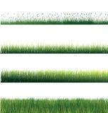 isolerat gräs Arkivfoto