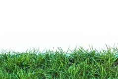 Isolerat gräsfält Arkivbild