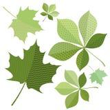 Isolerat grönt blad av trädet Arkivfoto