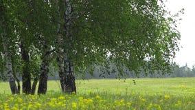 Isolerat grönt träd och blomningfält med blomman, härligt vårlandskap
