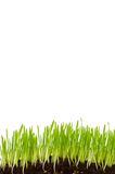 isolerat gräs Royaltyfri Fotografi