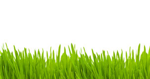 isolerat gräs Royaltyfria Foton