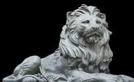 Isolerat lejon på svart bakgrund Arkivfoton