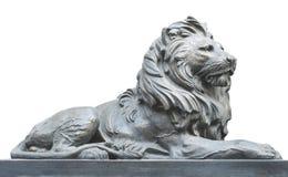 Isolerat lejon på vit bakgrund Royaltyfri Fotografi