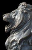 Isolerat lejons huvud på svart bakgrund Fotografering för Bildbyråer