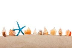 Isolerat marin- stjärna och snäckskal Royaltyfri Bild