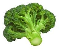 isolerat nytt för broccoli Royaltyfri Fotografi