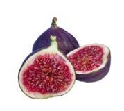 isolerat nytt för figs Arkivfoton