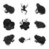 Isolerat objekt av fauna- och reptillogoen Ställ in av faunor och anuran materielvektorillustration royaltyfri illustrationer