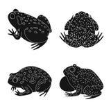 Isolerat objekt av fauna- och reptilsymbolen Samlingen av faunor och anuran lagerför symbolet för rengöringsduk royaltyfri illustrationer