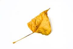Isolerat orange höstblad Royaltyfri Bild