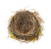 isolerat rede för blackbird detalj Arkivbilder
