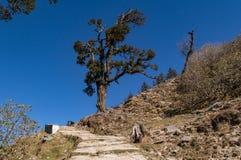 Isolerat rhododendronträd enroute till Chandrashila och Tungnath Royaltyfri Bild