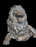 Isolerat sittande lejon på svart bakgrund Arkivbild