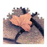 Isolerat torrt blad på jordningen - begreppsbild i pussel Royaltyfria Foton