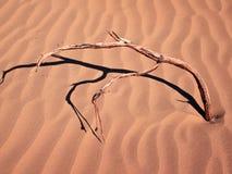 Isolerat torrt fattar i sanden Royaltyfria Bilder
