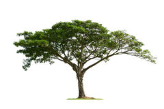 Isolerat träd arkivfoton