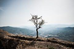 Isolerat träd, i att hålla ögonen på dalen Royaltyfria Foton