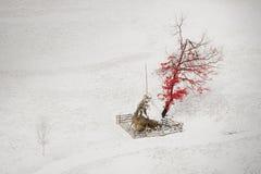 Isolerat träd i mitt av vintern Arkivbild